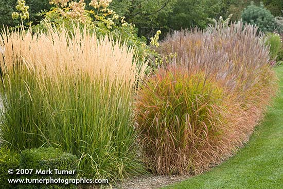 Fall Grasses at Elysium Gardens