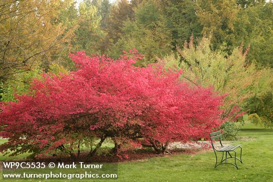 Burning Bush in Finch Arboretum
