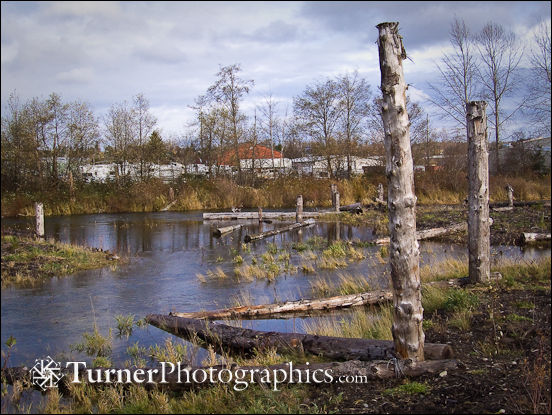 Whatcom Creek Restoration