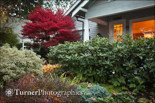 Japanese Maple and other shrubs in front of home