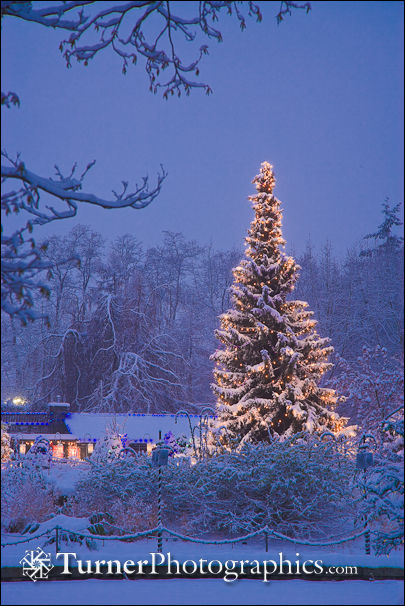 VanDusen Lights in Snow