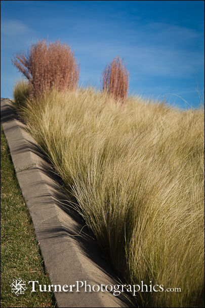 Mexican Feather Grass and Little Bluestem