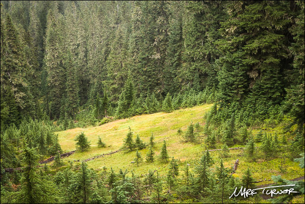Mountain Hemlock & Subalpine Fir forest