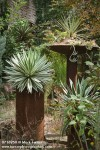 0716950 Agaves in containers on large pillars in succulent garden [Agave sp.]. Logan, Tulsa, OK. © Mark Turner