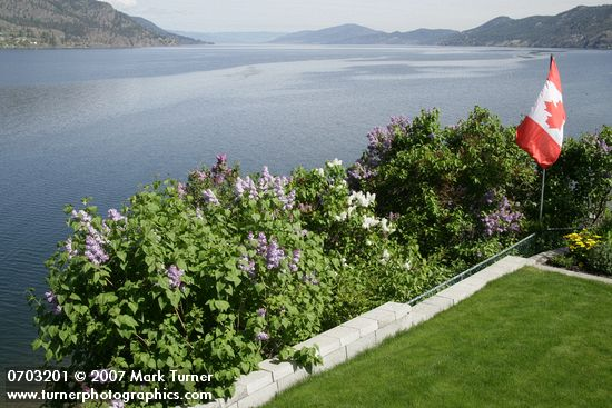 Lilacs border a garden overlooking Okanagan Lake