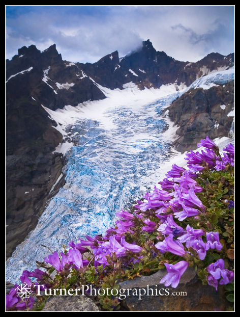 Deming Glacier with Penstemon