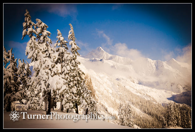 Mt. Shuksan framed by snow-covered Mountain Hemlocks