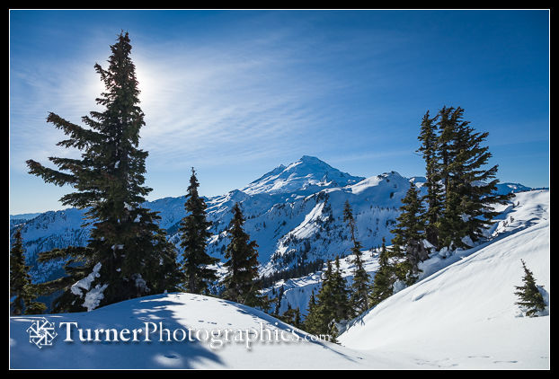 Mt. Baker framed by Mountain Hemlocks
