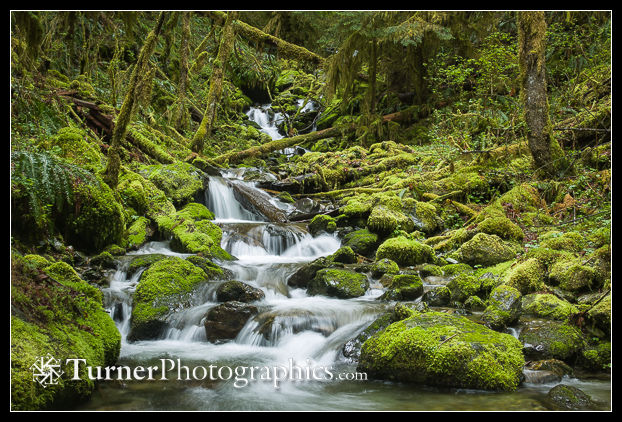Rushing stream in mossy forest.