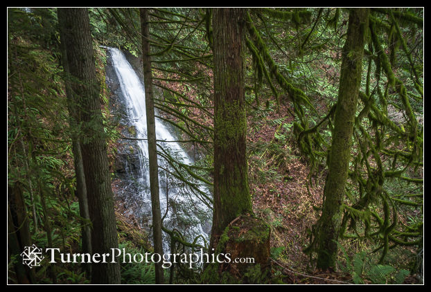 Waterfall framed by conifers