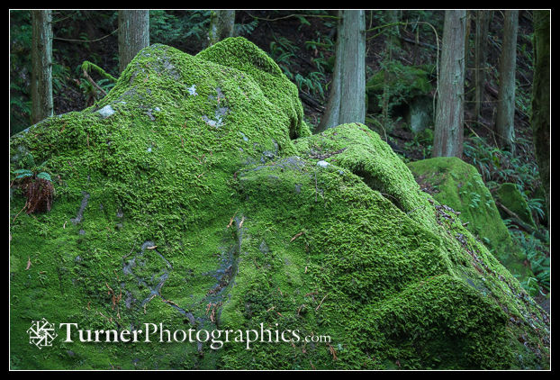 Moss-covered boulder
